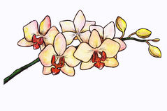 Orchidea (Zen Pictures II, 2012) Fotografia Stock Libera da Diritti
