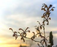 Orchidea zmierzchu tło obraz stock