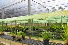 Orchidebauernhof Lizenzfreie Stockbilder