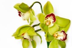 Orchideeën Royalty-vrije Stock Afbeelding