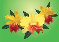 Orchideeën. Stock Afbeelding