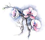 Orchideeën royalty-vrije illustratie