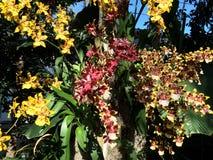 Orchideeën binnen Royalty-vrije Stock Foto's