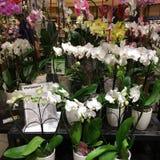 Orchideeën in bloempotten Stock Foto's