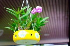 Orchideeën in ceramische potten worden gekweekt die in koffiewinkel die hangen Royalty-vrije Stock Afbeeldingen