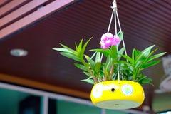 Orchideeën in ceramische potten worden gekweekt die in koffiewinkel die hangen Stock Fotografie