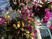 Orchideeën in de hemel Stock Fotografie