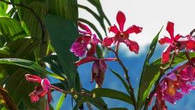 Orchideeën die bij de ruïnes bij machupicchu groeien stock afbeelding