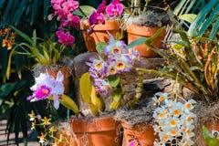 Orchideeën die in de tropische serre bij de Frederick Meijer-tuinen bloeien royalty-vrije stock afbeelding