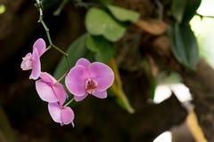 Orchideeën die met bos groeien Stock Fotografie
