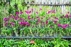 Orchideeën in een kinderdagverblijfdeel van tuin Stock Foto