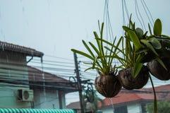 Orchideeën en regen stock afbeeldingen