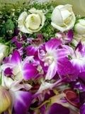 Orchideeën en rozen royalty-vrije stock foto's