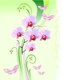 Orchideeën en vlinders stock illustratie