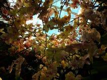 Orchideeën in hemel Royalty-vrije Stock Foto's