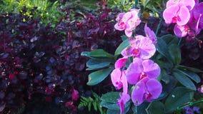 Orchideeën met purpere bloemblaadjes stock afbeelding