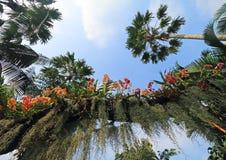 Orchideeën onder palmenboom Royalty-vrije Stock Foto