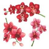 Orchideeën op een witte achtergrond Schets in alcoholtellers die wordt gedaan Stock Afbeelding