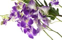 Orchideeën op Witte Achtergrond Stock Fotografie