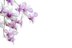 Orchideeën op witte achtergrond worden geïsoleerd die stock foto