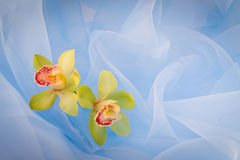 Orchideeën. Romantische achtergrond. stock fotografie