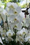 Orchideeën, rozen en bloemen Royalty-vrije Stock Foto