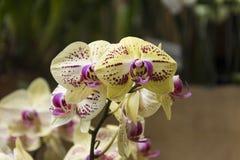 Orchideeën, rozen en bloemen Stock Afbeelding
