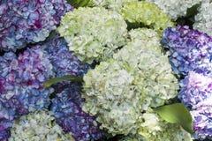 Orchideeën, rozen en bloemen Royalty-vrije Stock Afbeeldingen