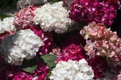 Orchideeën, rozen en bloemen Stock Afbeeldingen