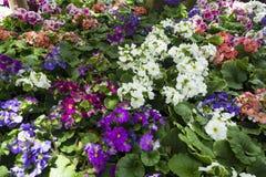 Orchideeën, rozen en bloemen Royalty-vrije Stock Fotografie