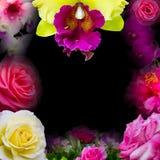 Orchideeën, rozen, mooi fotokader Stock Afbeeldingen