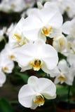 Orchideeën s2 royalty-vrije stock foto's