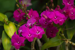 Orchideeën violet mooi boeket Stock Foto's