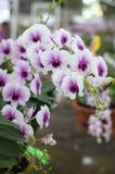 Orchideeënachtergrond Stock Foto's
