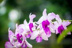 Orchideeënbloemen royalty-vrije stock foto