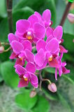 Orchidee 011 Royalty-vrije Stock Fotografie