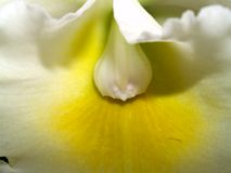 Orchidee 04 Stockfoto