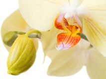 Orchidee 1 Stockfoto