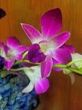 orchidee zdjęcie stock