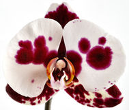 Orchidee Stock Foto