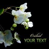 Orchidee Stock Foto
