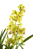Orchidee stock foto's