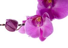 orchidee Obrazy Royalty Free