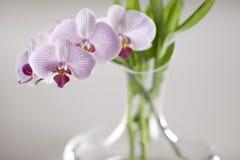 Orchidee-1 Stock Afbeelding