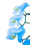 Orchidee 2 Stockfoto
