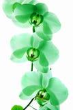 Orchidee 10 Stockfotos