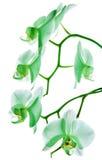 Orchidee 11 Lizenzfreies Stockfoto