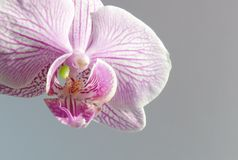 Orchidee Royalty-vrije Stock Foto's
