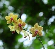 Orchidee Stockbilder