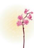 Orchidee royalty illustrazione gratis
